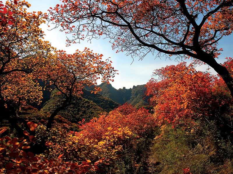 青州市黄花山自然风景区